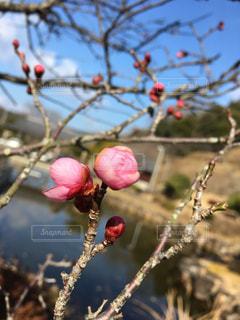 花の写真・画像素材[318879]