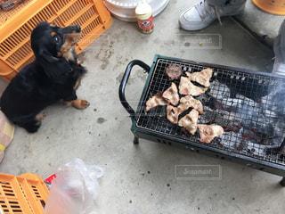 犬の写真・画像素材[352666]