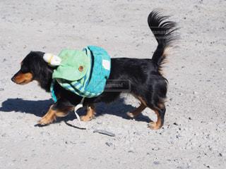 犬の写真・画像素材[352670]