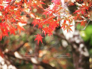 近くの木のアップの写真・画像素材[856521]