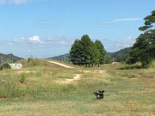緑豊かな緑の草原で遊ぶ犬 - No.857921