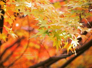 近くの木のアップの写真・画像素材[859656]