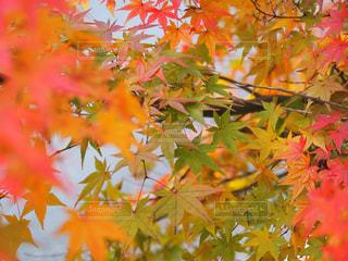 近くの木のアップの写真・画像素材[873559]