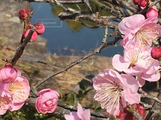 植物にピンクの花の写真・画像素材[1098690]