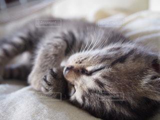 近くにベッドの上で横になっている猫のアップの写真・画像素材[1355156]