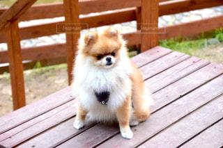 犬 - No.242696