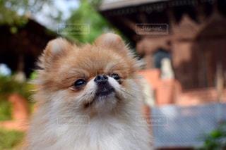 No.242703 犬