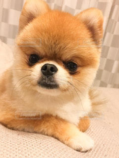 No.242708 犬