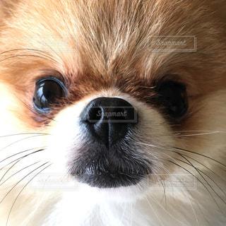 犬 - No.242738