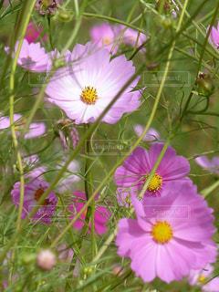 自然 - No.242796