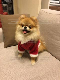 No.244295 犬