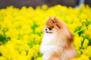 犬の写真・画像素材[262244]