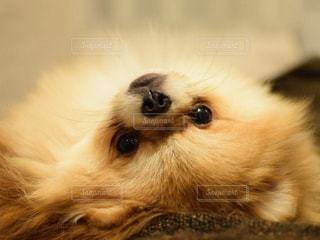 犬の写真・画像素材[262245]