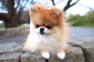 犬 - No.265997