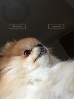犬の写真・画像素材[270466]