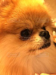 No.275789 犬