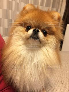 犬の写真・画像素材[275819]