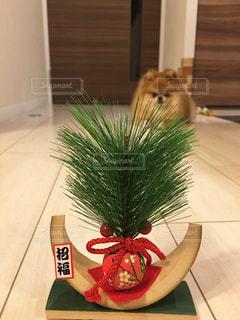 犬の写真・画像素材[292554]