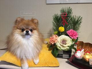 犬の写真・画像素材[298438]