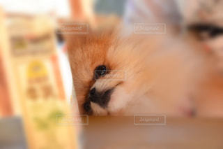 犬 - No.310057