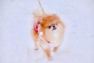 犬 - No.313863