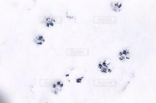 犬の写真・画像素材[314319]