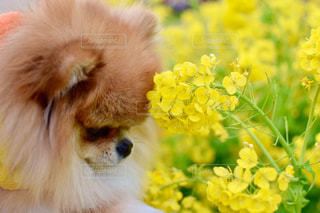 犬 - No.318023