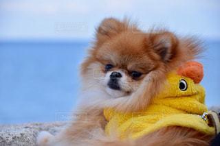 犬の写真・画像素材[318254]