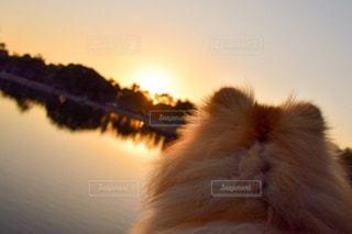 犬 - No.332877