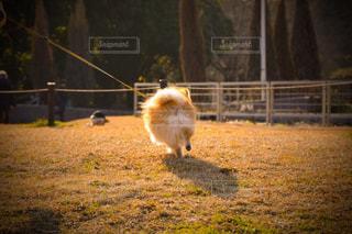 犬の写真・画像素材[333727]