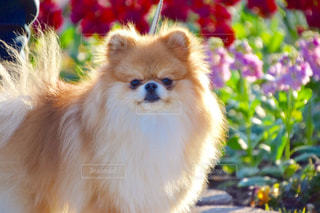 犬の写真・画像素材[333728]