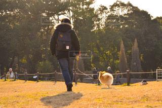 犬の写真・画像素材[333729]