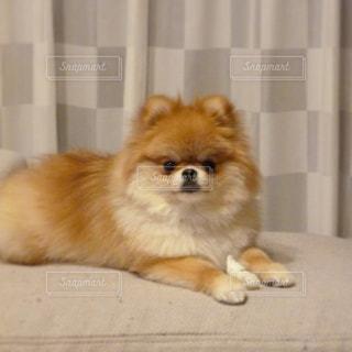 犬 - No.346731