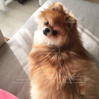 犬 - No.346732