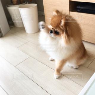 犬 - No.363524