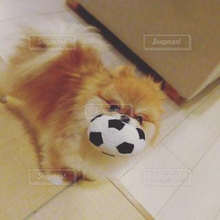 犬の写真・画像素材[372647]