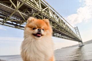 犬の写真・画像素材[444188]