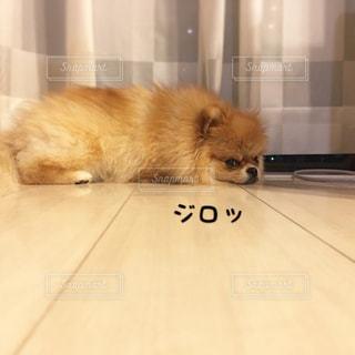 犬の写真・画像素材[520578]