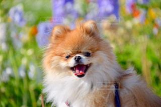 犬 - No.520579