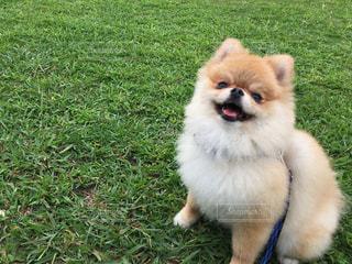 草の中に座っている犬の写真・画像素材[1224996]