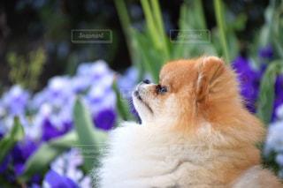 近くに犬のアップの写真・画像素材[1224998]