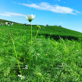 花の写真・画像素材[246685]