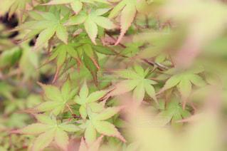 自然の写真・画像素材[243896]