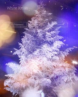 冬の写真・画像素材[243908]