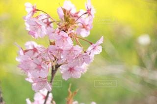 春の写真・画像素材[370998]