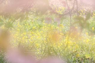 春の写真・画像素材[370999]