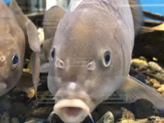魚の写真・画像素材[245793]