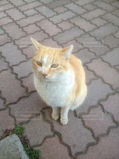 猫の写真・画像素材[242884]