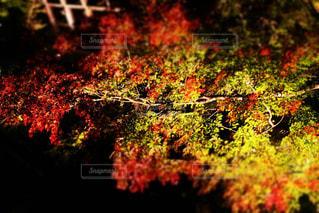 自然の写真・画像素材[257556]