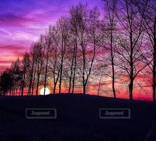 自然の写真・画像素材[8776]